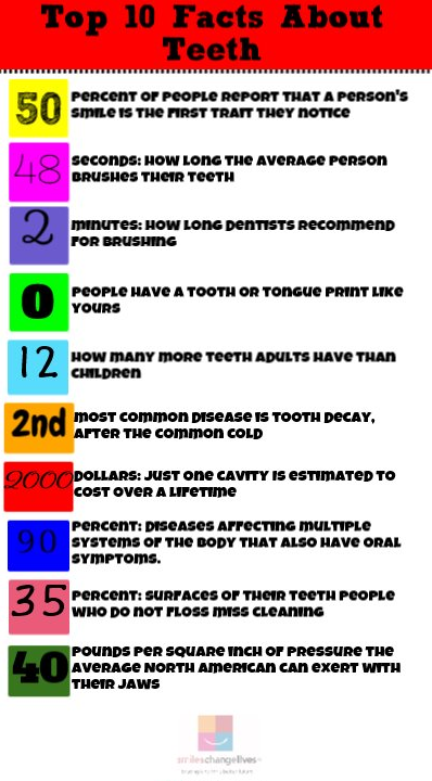 fun facts about teeth number by number smiles change lives